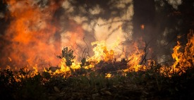 forest-fire-2268729_1280